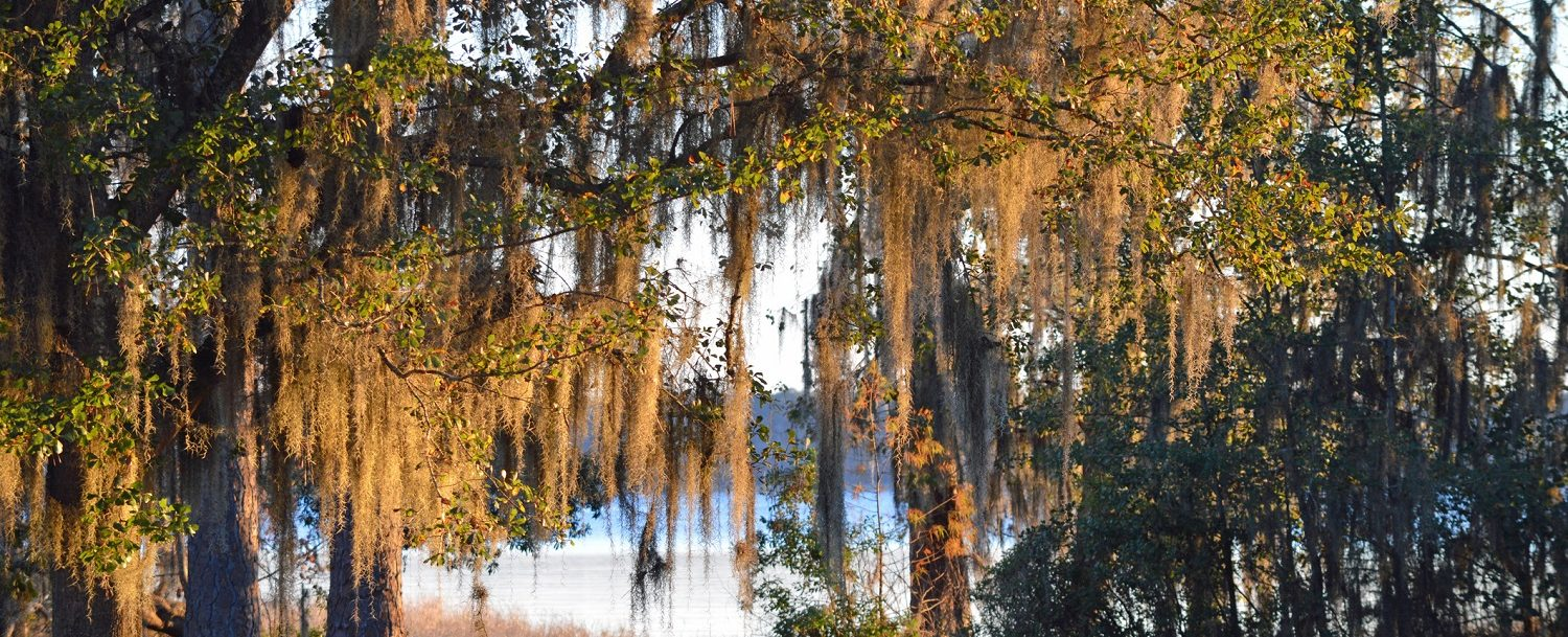 Outdoors with Oak Tree and Lake| Free Things to do in Gainesville, FL