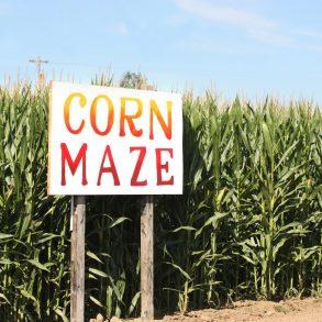 Newberry Cornfield Maze