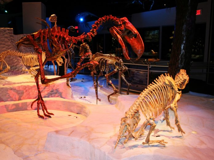 You will never run out of things to do during your stay at Sweetwater Branch Inn. One of the most popular activities in Gainesville is to visit a museum; there are many options of which to frequent! One of the most popular is the Florida Museum of Natural History.