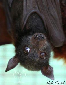 lubee bat conservancy