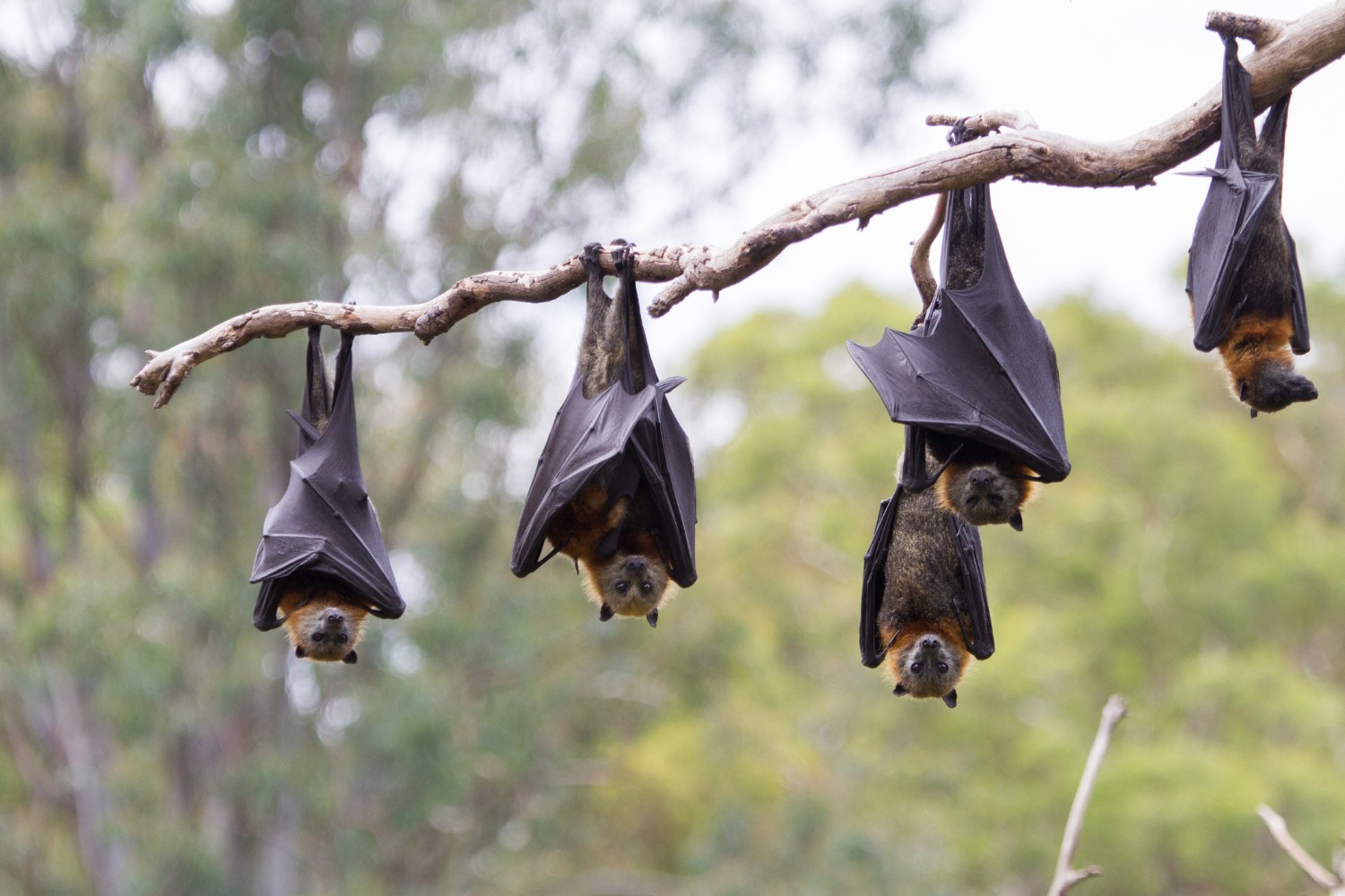 7 of the Most Fascinating Facts About the Lubee Bat Conservancy - Sweetwater Branch Inn