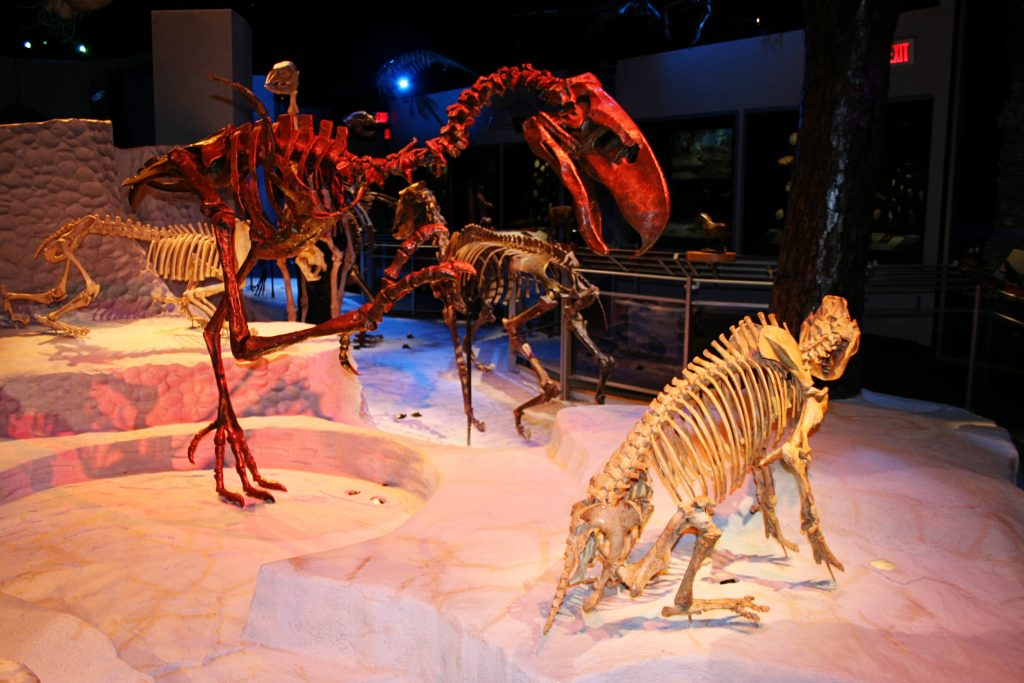 Fossil_Hall_at_Florida_Museum_of_Natural_History