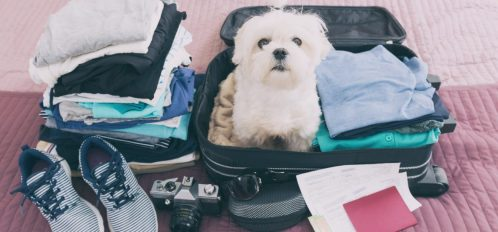 dog sitting in a suitcase that wants to go on the vacation too