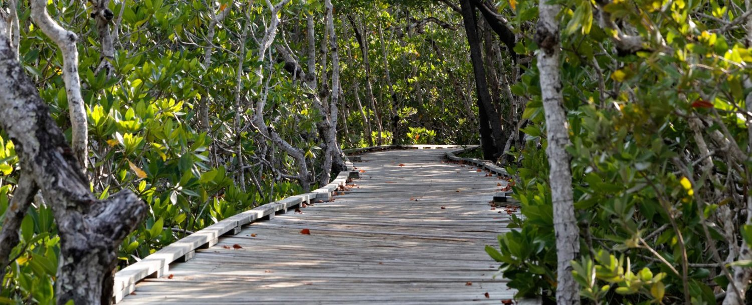 Sweetwater Wetlands Park path