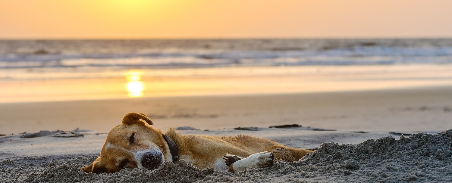 Dog sleeping on beach in Gainesville FL